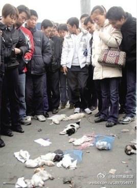 城管为驱赶街边卖宠物的小贩,当街摔死10只宠物小狗,它们是无辜的,谁都没有权利这样对它们下如此毒手,让我们为生命祈祷,让更多的人看到我们身边那些所谓的人民公仆!.jpg