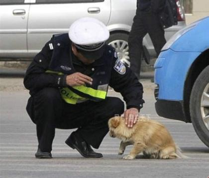 【有爱的一幕】武汉闹市区的十字路口,一小狗过马路时被车流斩断去路,它可能吓坏了。停在路中一动不动。这时,一位上前轻抚其头部,并带狗狗离开马路中央。.jpg