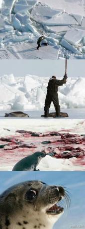 不要再杀海豹了 好吗?没有良知的人呐~ 你能看到她在流泪么.jpg