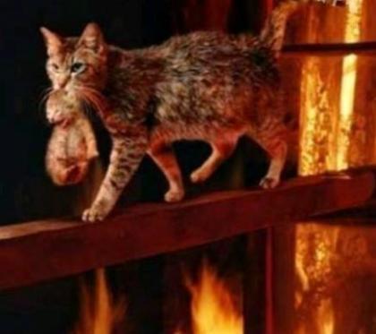 火灾现场感人的一幕 :猫妈妈不顾危险把宝宝救出 ,以致身上多处烧伤。 伟大的母爱.jpg
