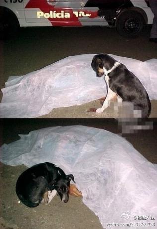 一只狗狗的主人被一辆车撞倒,当场死亡,医生遮盖主人身体的时候,狗狗不停嗅着他的手臂,狗狗蜷缩在主人身边,哭了。——地球感慨:人类有时候怎么会那么冷漠?冷漠的都不如一只狗狗!.jpg