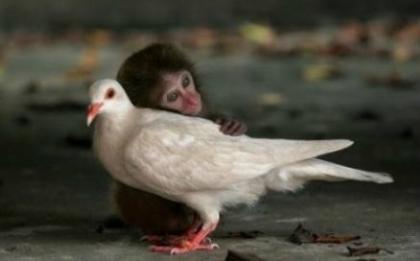 一只与妈妈走失的小猴子,对这个世界既充满了恐惧,又满怀着希望,它深情地拥着白鸽,体验着这个世界;白鸽没有害怕和抗拒,它用接纳回应着这只孤独的小猴子。爱无疆,谁说过爱只存在于人类?.jpg