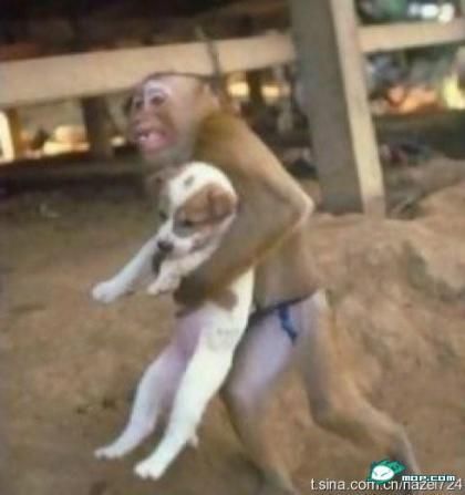 南京爆炸现场 可爱的猴子抱着狗狗逃命!(猴子呀猴子~ 你比很多自命高尚的人更有人性~).jpg