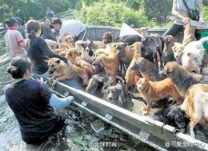 泰国洪灾当前,寺庙和动保组织忙得不可开支,图中仅为一个小镇就把600多只流浪狗转移到高处,在那里处处可以感受到,那是一个有信仰的国家。.jpg