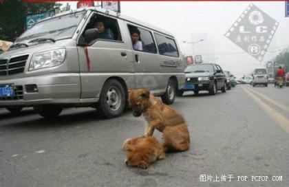 一小狗遭遇车祸9.jpg