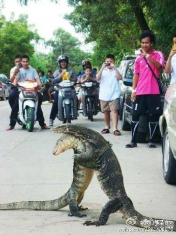 泰国水灾之后,一对久别重逢的伴侣相拥的感人画面!.jpg
